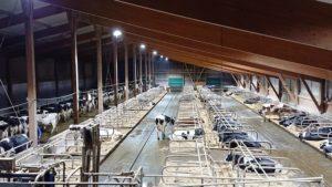 LED Beleuchtung Landwirtschaft